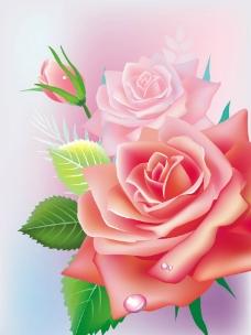 浪漫梦幻花纹花朵 玫瑰水珠水滴图片