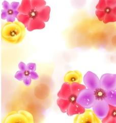 万紫千红图片