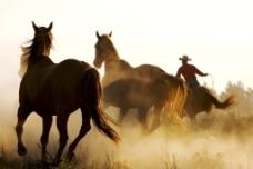 奔腾的马匹图片