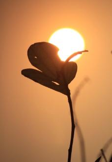 日落黄昏图片