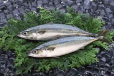 海鲜食材图片