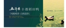 五斗米稻田鸭图片