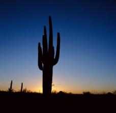 沙漠日落图片