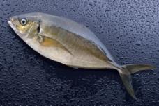 海鲜 海鱼图片
