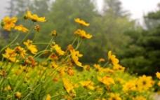 黄花丛图片
