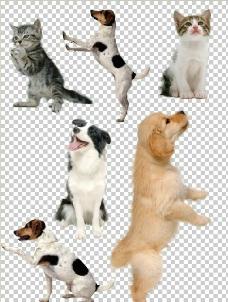 猫狗集合抠图图片