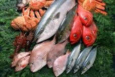海鲜 海鱼 鱼类 海鲜食材图片