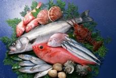海鲜 海鱼 鱼类 游水海鲜图片