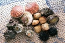 海鲜 海螺 螺子肉海产品 海产品图片