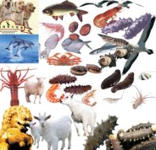 动物大全图片