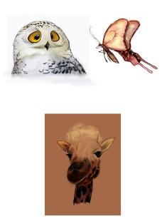 动物手绘素材图片