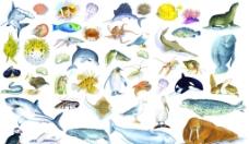 水生物图片