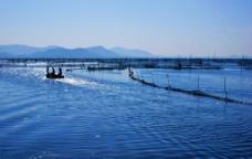 太湖捕鱼图片