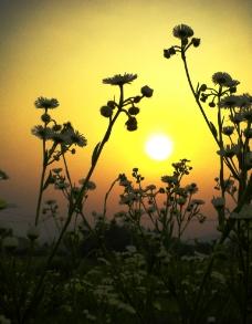 夕阳西下(非高清)图片