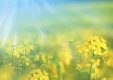 陽光與花朵