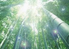 竹子 太陽 光線