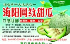 网纹甜瓜海报图片
