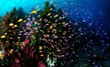 色彩斑斓的热带鱼图片