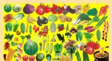 各种蔬菜水果图片