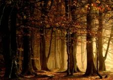 黄昏的树林图片