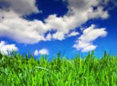 藍天白云綠野草地圖片
