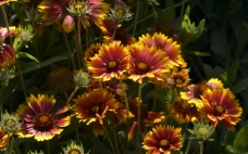 花卉 花朵