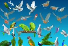 各类鸟图片