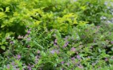 茂密的小花图片