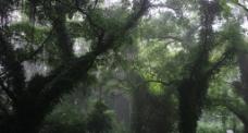雾中植物园图片