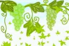 葡萄藤图片