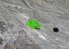 临安里畈水库的蛙图片