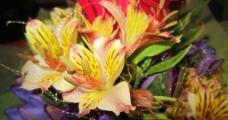 多彩鲜花图片