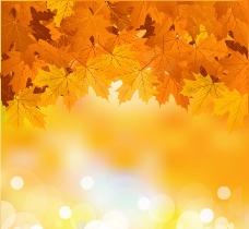 秋天枫叶梦幻背景图片