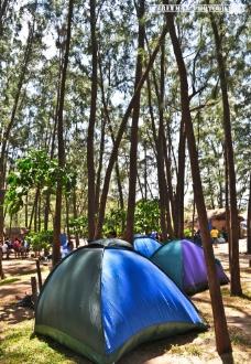 户外树林野营图片