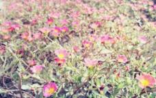 花儿朵朵开图片
