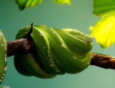 優雅的蛇圖片
