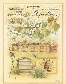 养蜂 蜜花 蜂蜜香图片