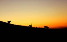 黄昏牧马图片