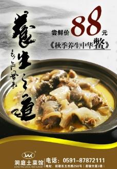 中华鳖图片