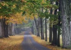 大自然景观图片