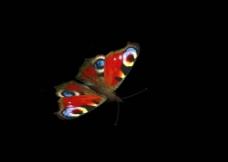 蝴蝶飞啊飞图片