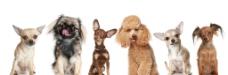 各种宠物狗图片
